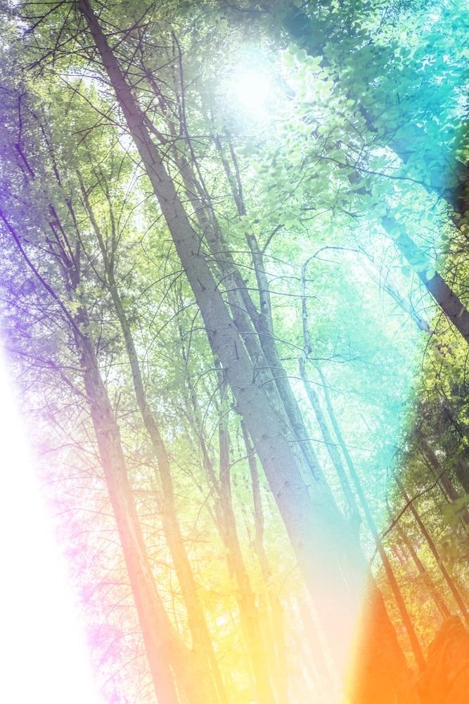 Ecologie, admettre pour comprendre et agir